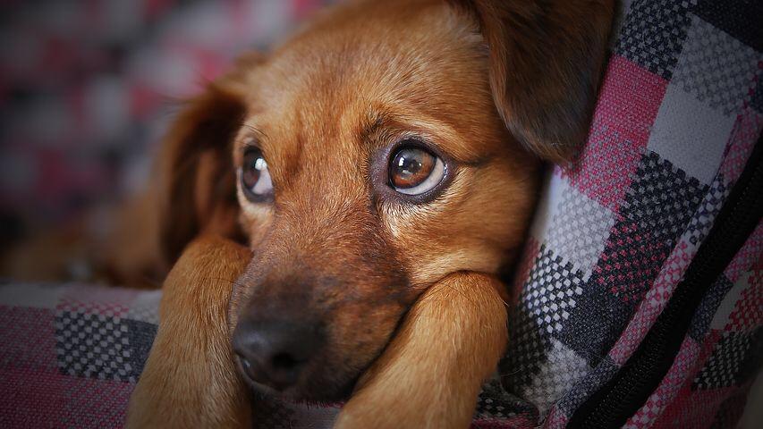 Hundeverbot im Haus D?! Aushang im Lift: